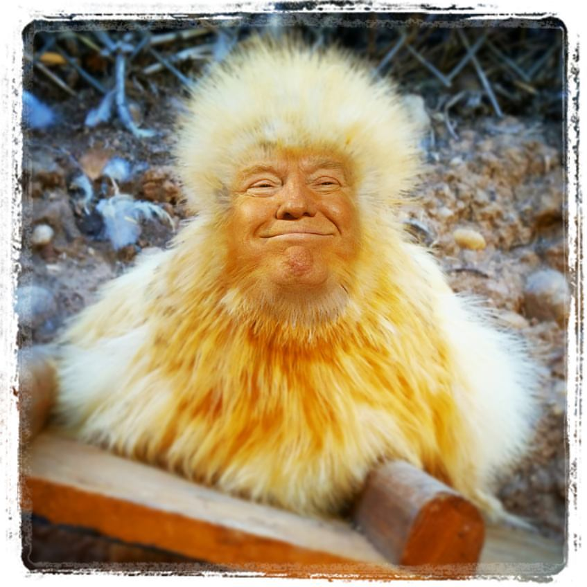 donald-trumps-hair-lives-in-my-backyard_feature-image